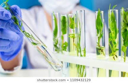 Bitki Biyoteknolojisi Nedir ? Ne İşe Yarar ?